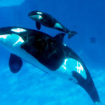 'Blackfish' has little impact on SeaWorld Parks attendance in Q4